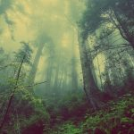 You Are A Rainforest— Biodiversity & The Microbiome